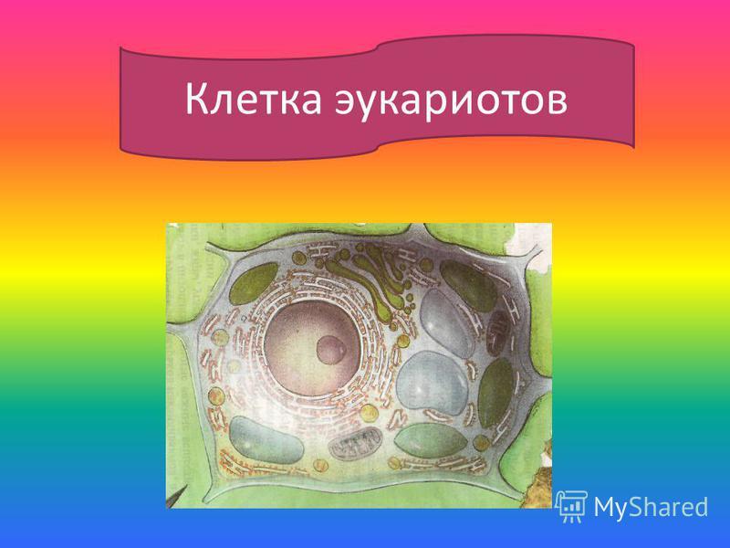 Клетка эукариотов