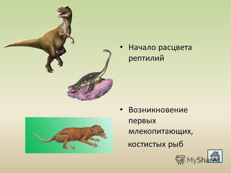 Начало расцвета рептилий Возникновение первых млекопитающих, костистых рыб