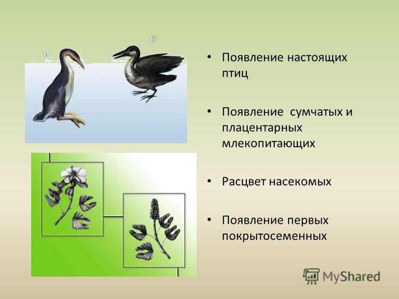 Появление настоящих птиц Появление сумчатых и плацентарных млекопитающих Расцвет насекомых Появление первых покрытосеменных