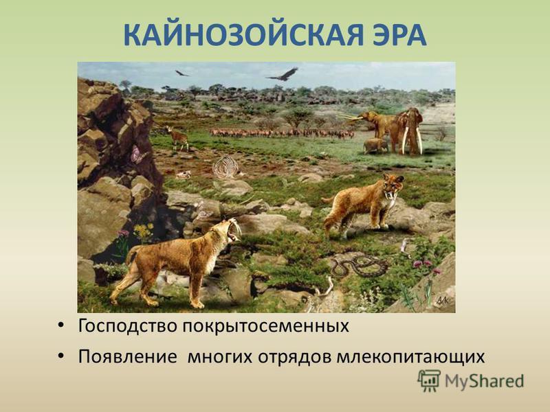 КАЙНОЗОЙСКАЯ ЭРА Господство покрытосеменных Появление многих отрядов млекопитающих
