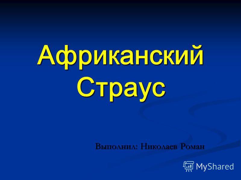 Африканский Страус Выполнил: Николаев Роман