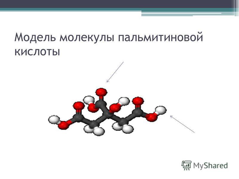 Модель молекулы пальмитиновой кислоты