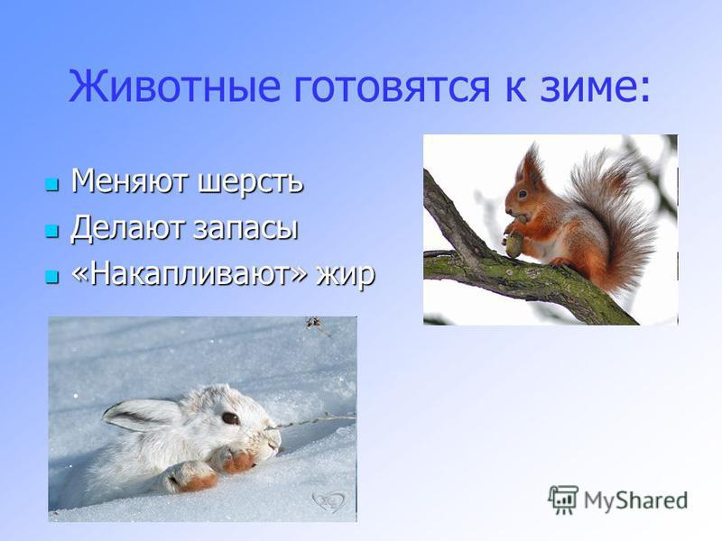 Животные готовятся к зиме: Меняют шерсть Меняют шерсть Делают запасы Делают запасы «Накапливают» жир «Накапливают» жир