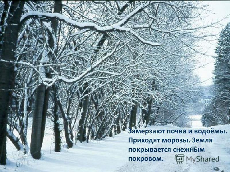 Замерзают почва и водоёмы. Приходят морозы. Земля покрывается снежным покровом.