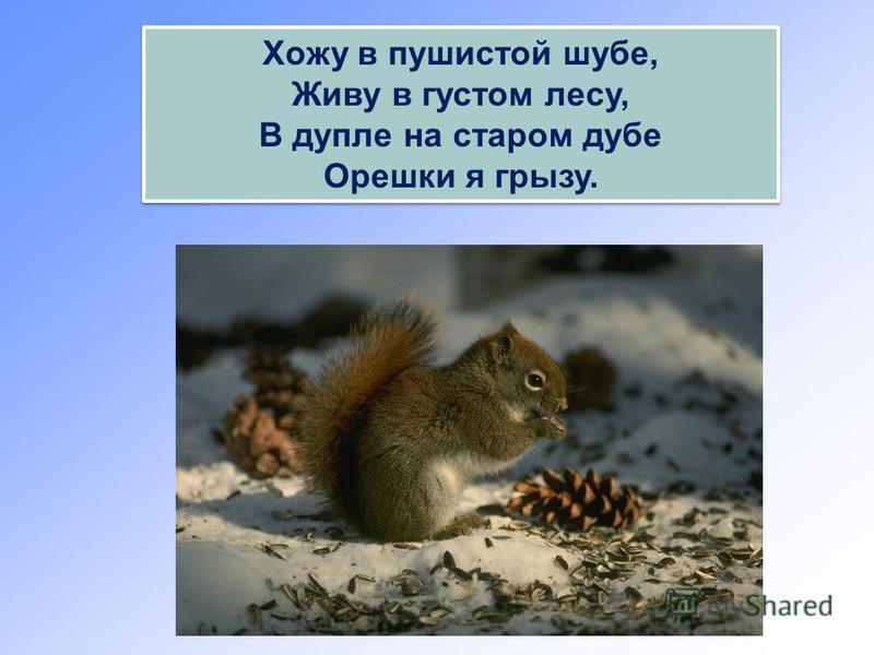 Хожу в пушистой шубе, Живу в густом лесу, В дупле на старом дубе Орешки я грызу. Хожу в пушистой шубе, Живу в густом лесу, В дупле на старом дубе Орешки я грызу.
