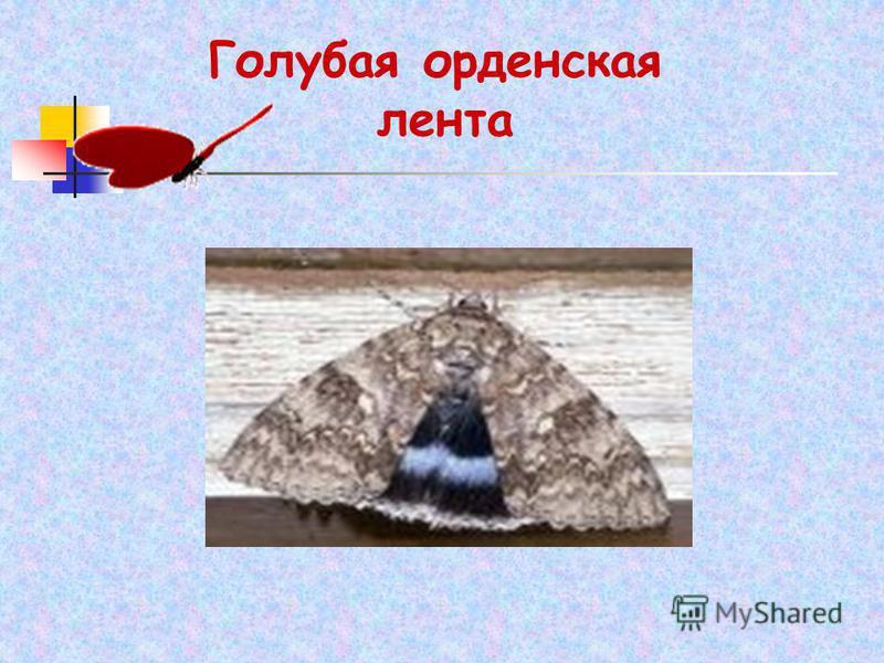 Голубая орденская лента
