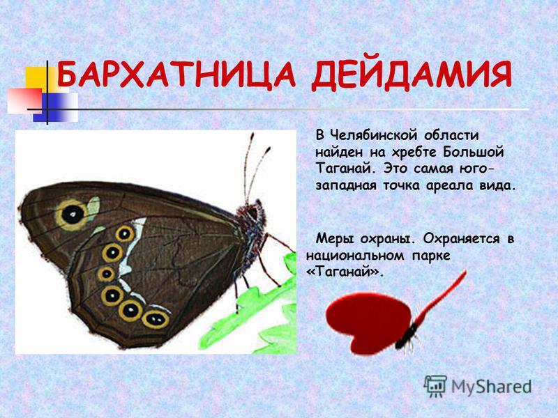 БАРХАТНИЦА ДЕЙДАМИЯ В Челябинской области найден на хребте Большой Таганай. Это самая юго- западная точка ареала вида. Меры охраны. Охраняется в национальном парке «Таганай».