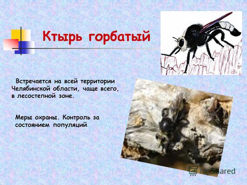 Ктырь горбатый Встречается на всей территории Челябинской области, чаще всего, в лесостепной зоне. Меры охраны. Контроль за состоянием популяций.