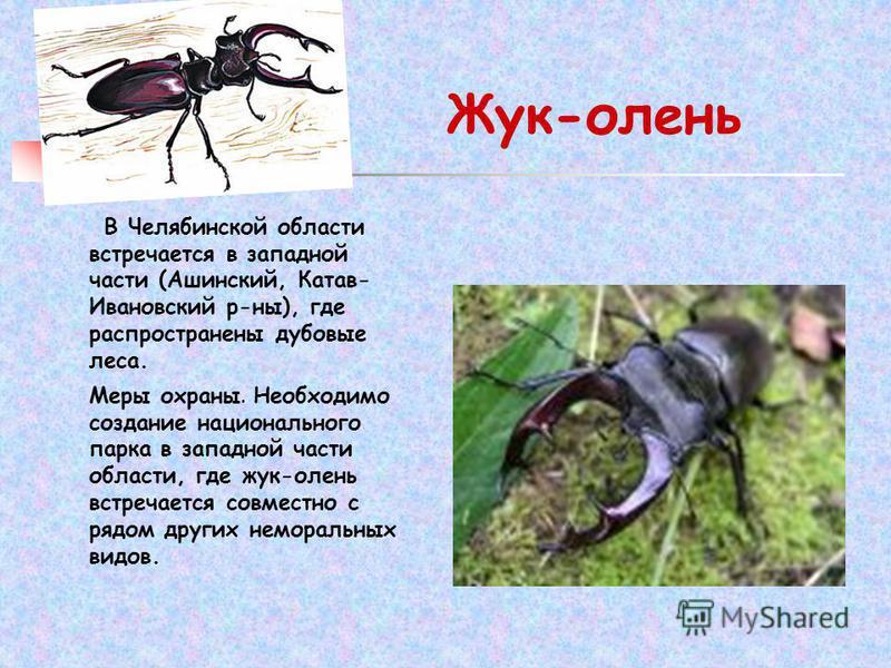 Жук-олень В Челябинской области встречается в западной части (Ашинский, Катав- Ивановский р-ны), где распространены дубовые леса. Меры охраны. Необходимо создание национального парка в западной части области, где жук-олень встречается совместно с ряд
