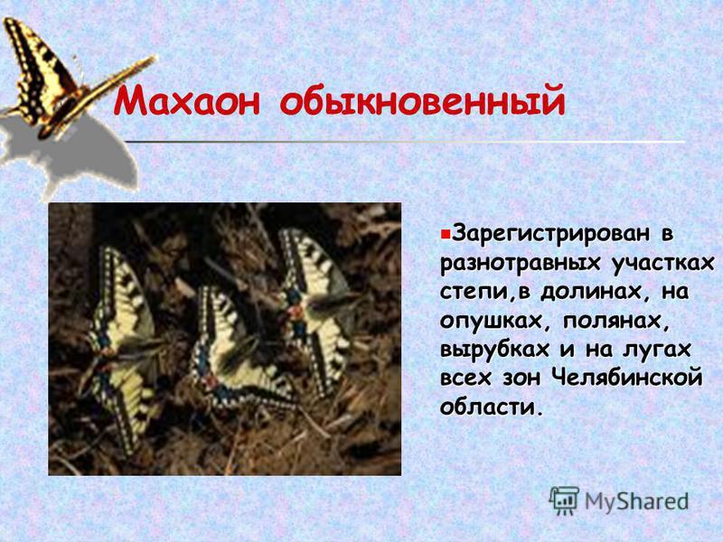 Махаон обыкновенный Зарегистрирован в разнотравных участках степи,в долинах, на опушках, полянах, вырубках и на лугах всех зон Челябинской области.
