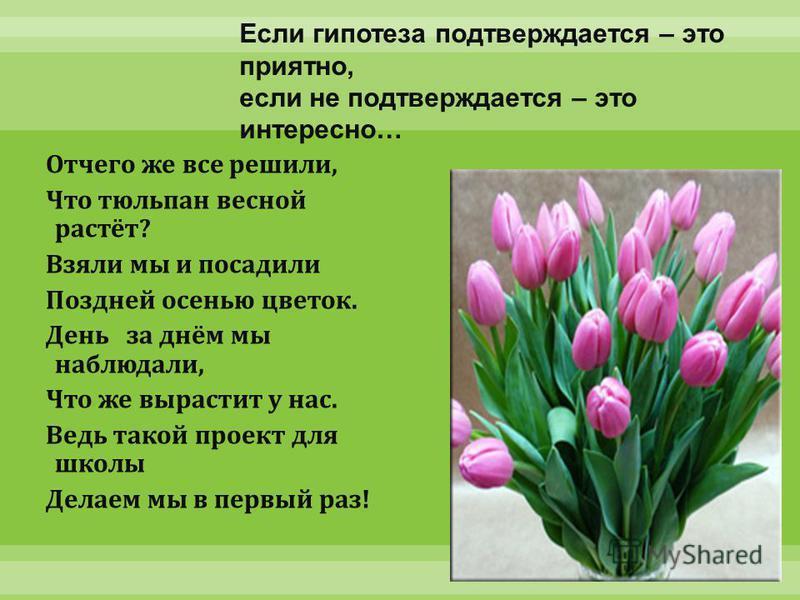Отчего же все решили, Что тюльпан весной растёт ? Взяли мы и посадили Поздней осенью цветок. День за днём мы наблюдали, Что же вырастит у нас. Ведь такой проект для школы Делаем мы в первый раз ! Если гипотеза подтверждается – это приятно, если не по