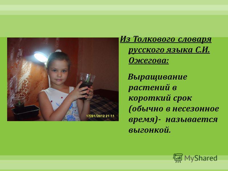 Из Толкового словаря русского языка С. И. Ожегова : Выращивание растений в короткий срок ( обычно в несезонное время )- называется выгонкой.