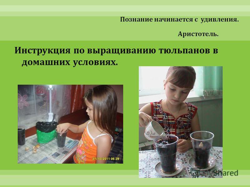Познание начинается с удивления. Аристотель. Инструкция по выращиванию тюльпанов в домашних условиях.
