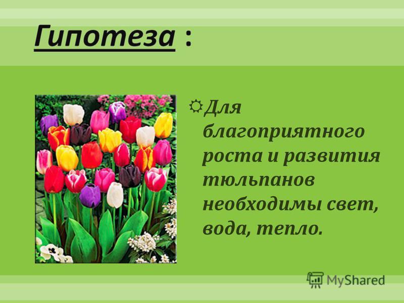 Для благоприятного роста и развития тюльпанов необходимы свет, вода, тепло.