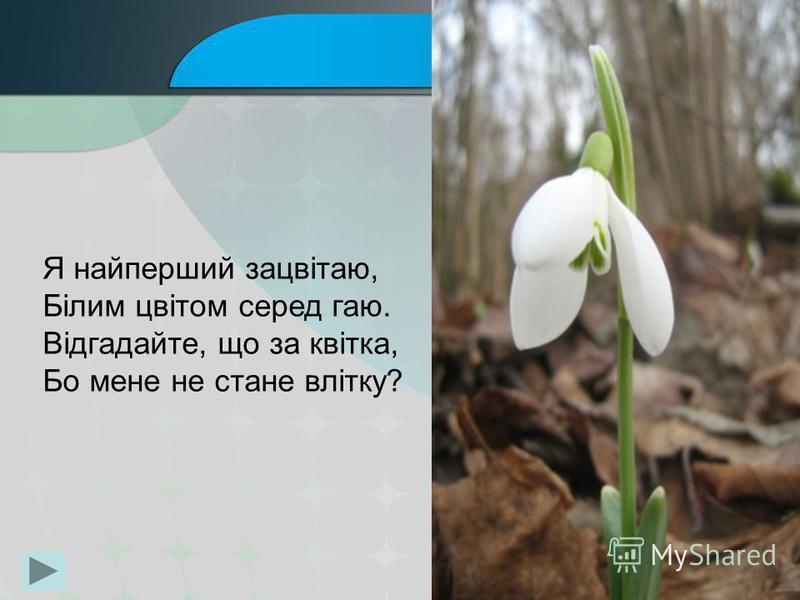 Я найперший зацвітаю, Білим цвітом серед гаю. Відгадайте, що за квітка, Бо мене не стане влітку?