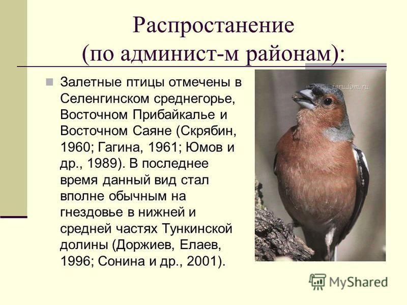 Распростанение (по админист-м районам): Залетные птицы отмечены в Селенгинском среднегорье, Восточном Прибайкалье и Восточном Саяне (Скрябин, 1960; Гагина, 1961; Юмов и др., 1989). В последнее время данный вид стал вполне обычным на гнездовье в нижне