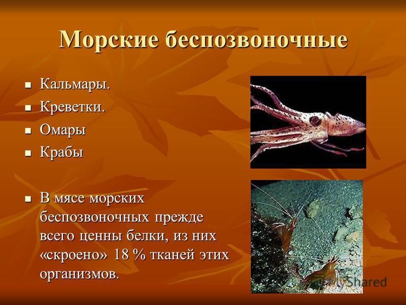 Морские беспозвоночные Кальмары. Кальмары. Креветки. Креветки. Омары Омары Крабы Крабы В мясе морских беспозвоночных прежде всего ценны белки, из них «скроено» 18 % тканей этих организмов. В мясе морских беспозвоночных прежде всего ценны белки, из ни