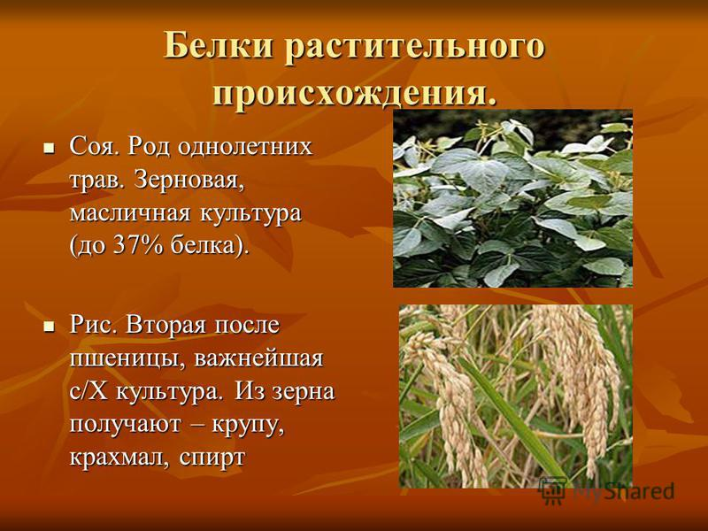 Белки растительного происхождения. Соя. Род однолетних трав. Зерновая, масличная культура (до 37% белка). Соя. Род однолетних трав. Зерновая, масличная культура (до 37% белка). Рис. Вторая после пшеницы, важнейшая с/Х культура. Из зерна получают – кр