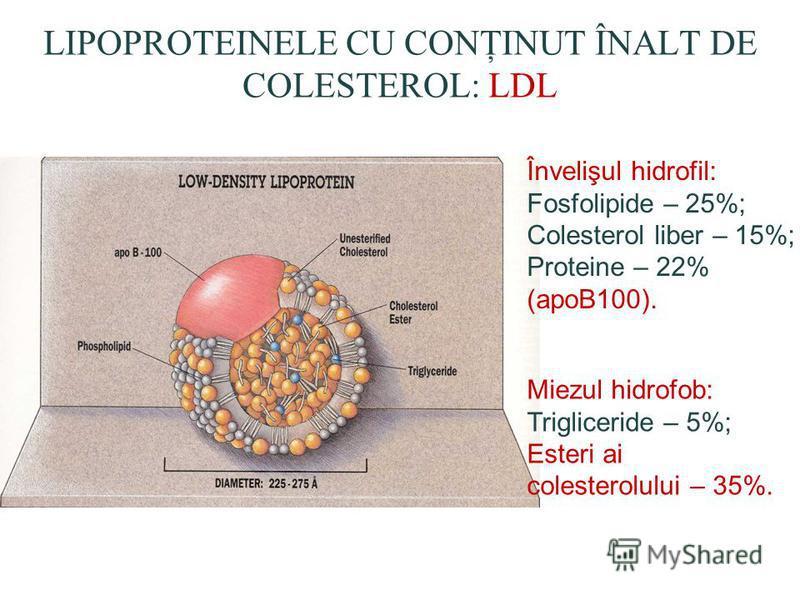 LIPOPROTEINELE CU CONŢINUT ÎNALT DE COLESTEROL: LDL Învelişul hidrofil: Fosfolipide – 25%; Colesterol liber – 15%; Proteine – 22% (apoB100). Miezul hidrofob: Trigliceride – 5%; Esteri ai colesterolului – 35%.