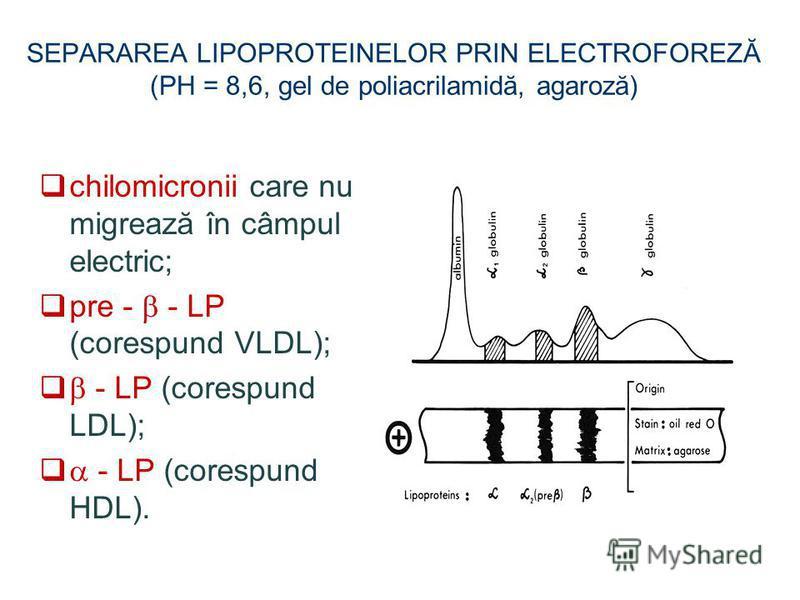 SEPARAREA LIPOPROTEINELOR PRIN ELECTROFOREZĂ (PH = 8,6, gel de poliacrilamidă, agaroză) chilomicronii care nu migrează în câmpul electric; pre - - LP (corespund VLDL); - LP (corespund LDL); - LP (corespund HDL).
