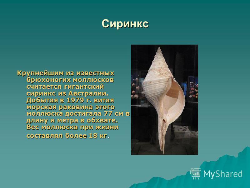 Мурекс или пурпурная улитка Очень красивая раковина моллюска. В 1876 г. во Франции при постройке железной дороги было найдено древнее захоронение. Вместе с людьми лежало оружие, инструменты, предметы обихода и…ожерелье из морских раковин. Мурекс полу