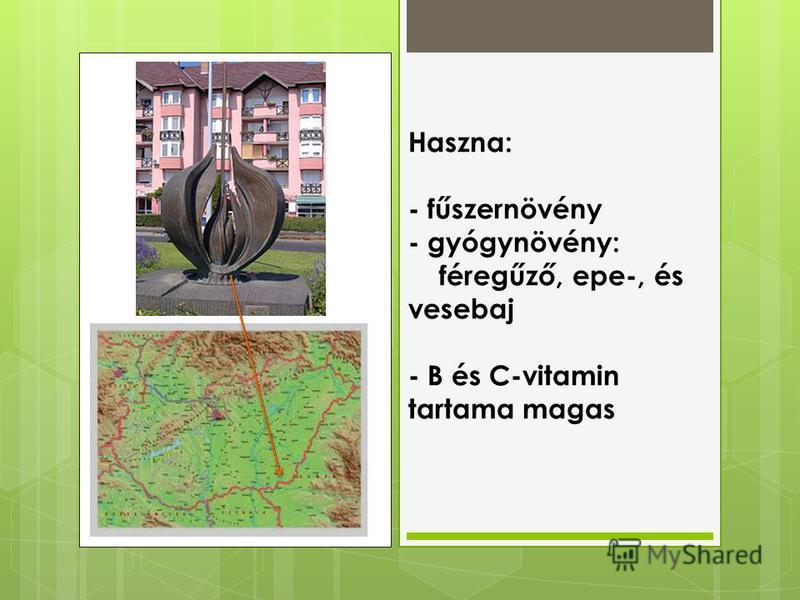 Haszna: - fűszernövény - gyógynövény: féregűző, epe-, és vesebaj - B és C-vitamin tartama magas