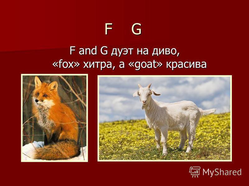 F and G дуэт на диво, «fox» хитра, а «goat» красива F G