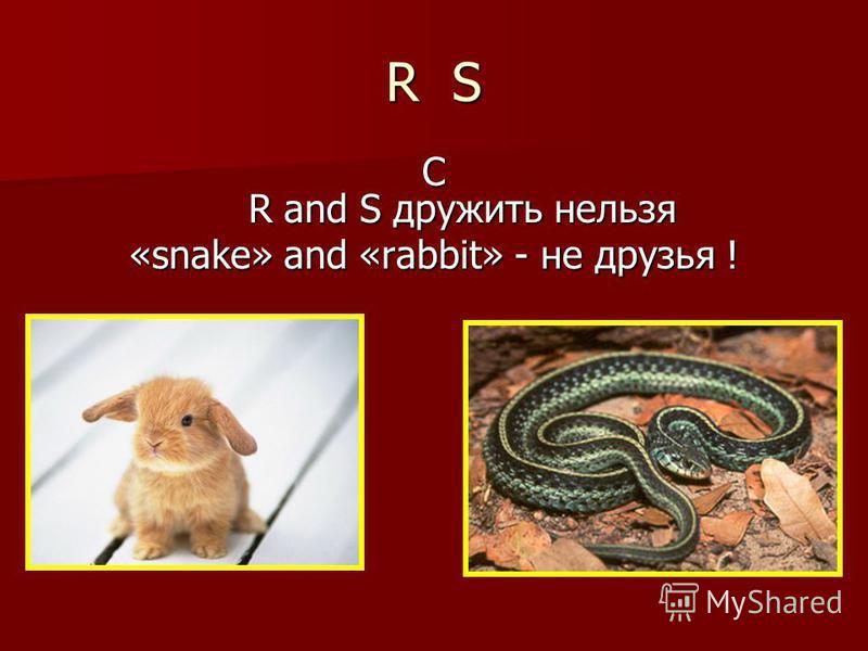 R S С R and S дружить нельзя «snake» and «rabbit» - не друзья !