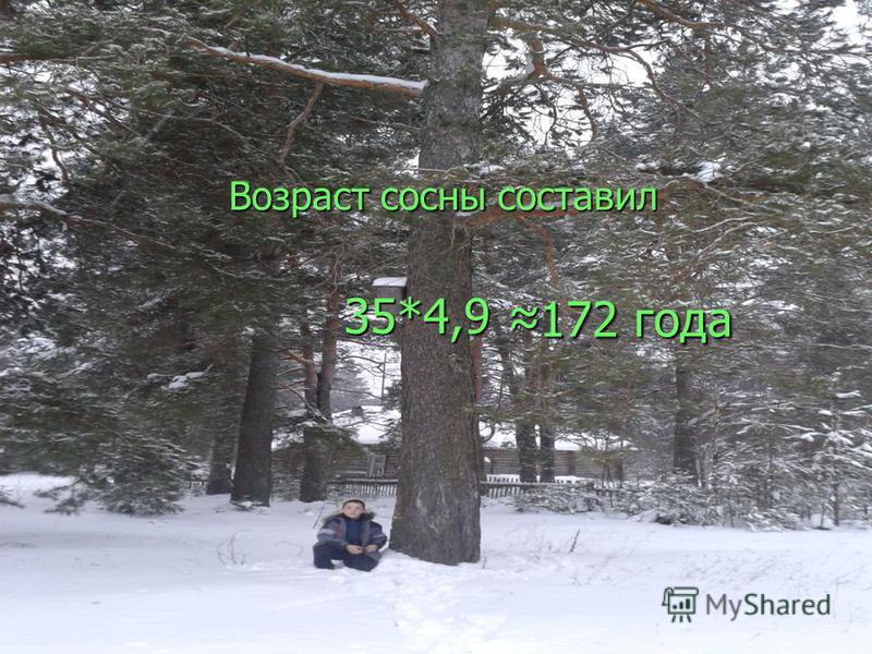 172 года Возраст сосны составил 35*4,9 35*4,9