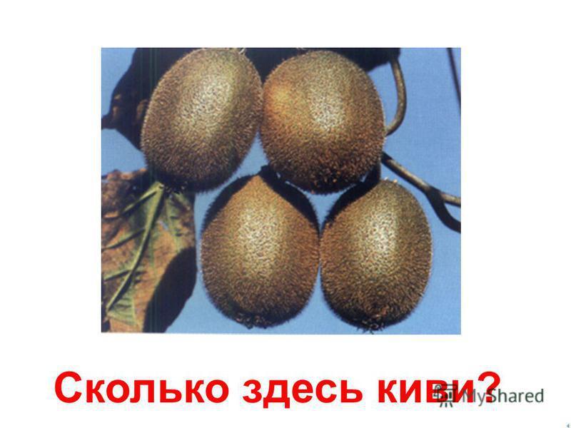 3 три фрукта