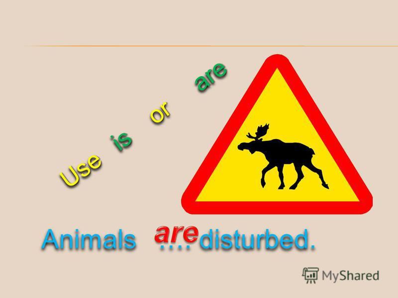 Use is or are Animals …. disturbed.