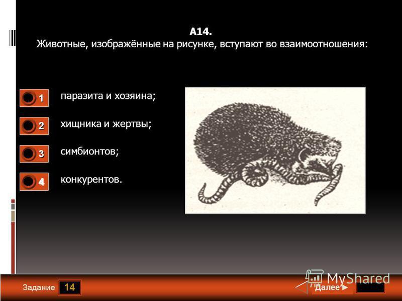 14 Задание А14. Животные, изображённые на рисунке, вступают во взаимоотношения: паразита и хозяина; хищника и жертвы; симбионтов; конкурентов. Далее 1 0 2 1 3 0 4 0