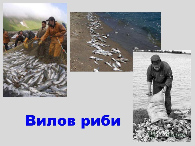 Вилов риби