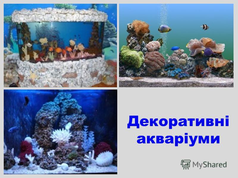 Декоративні акваріуми