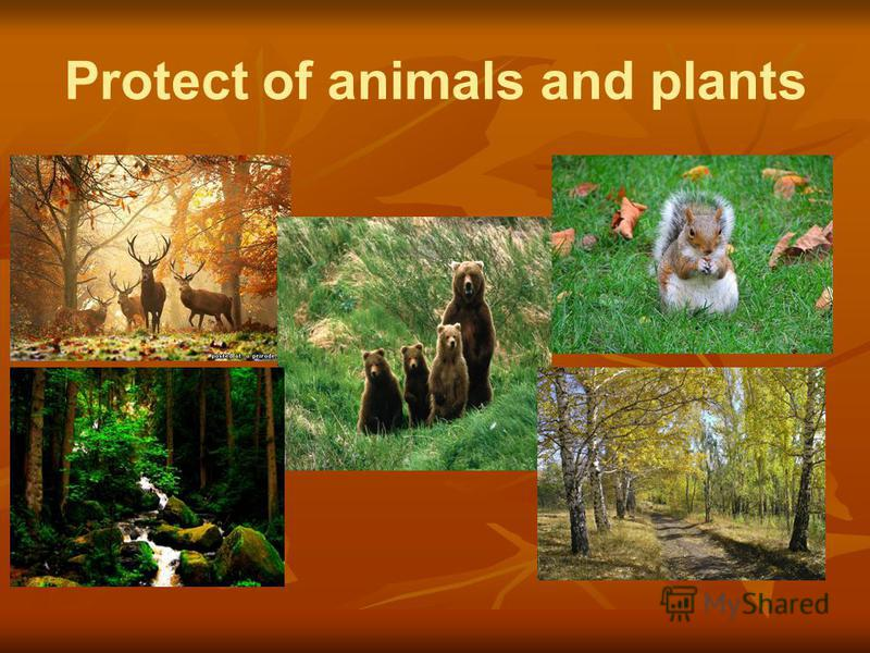 """protection of animals essay 'would you like to see humans becoming extinct after sometime animals are as important as humans and then how can we see animals extinct mahatma gandhi (1956) had a quote which was""""the greatness of a nation and its moral progress can be judged by the way animals are treated."""