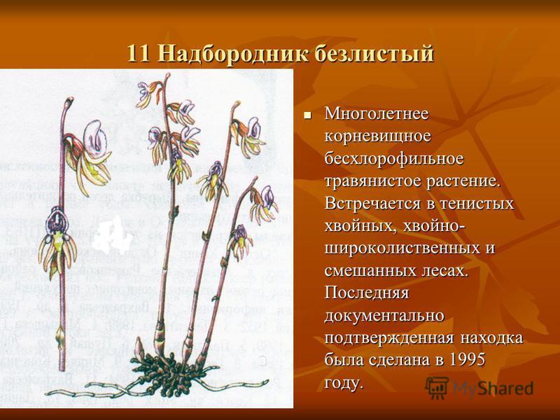 11 Надбородник безлистый Многолетнее корневищное бесхлорофильное травянистое растение. Встречается в тенистых хвойных, хвойно- широколиственных и смешанных лесах. Последняя документально подтвержденная находка была сделана в 1995 году. Многолетнее ко