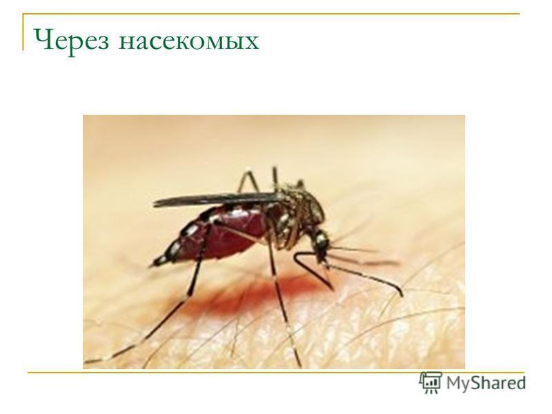 Через насекомых