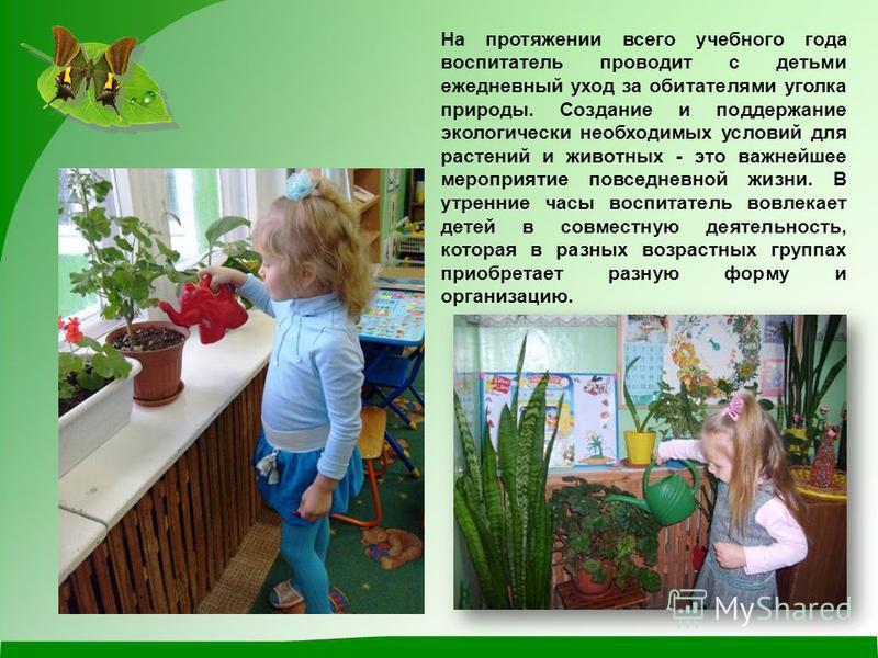 На протяжении всего учебного года воспитатель проводит с детьми ежедневный уход за обитателями уголка природы. Создание и поддержание экологически необходимых условий для растений и животных - это важнейшее мероприятие повседневной жизни. В утренние