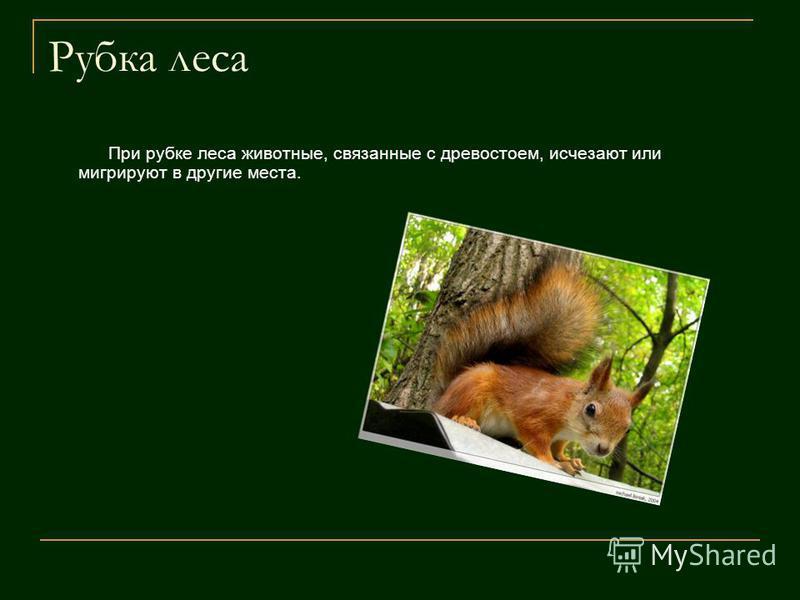 Рубка леса При рубке леса животные, связанные с древостоем, исчезают или мигрируют в другие места.