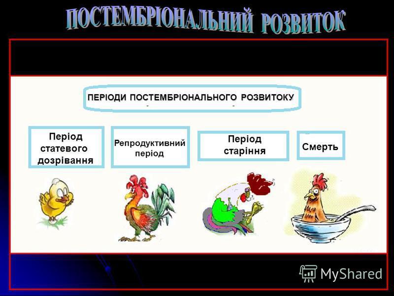 НЕПРЯМИЙ НЕПРЯМИЙ тип розвитку забезпечує кілька важливих біологічних функцій, які сприяють існуванню виду Яйце ІІІ Живильна функція Живильна функція. На певній фазі розвитку тварина отримує найбільше поживних речовин, потрібних для завершення розвит
