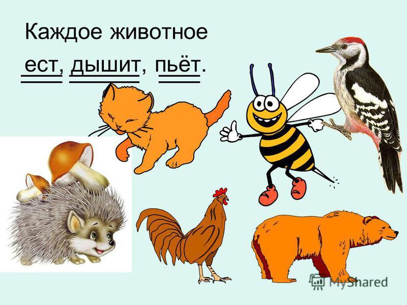 Каждое животное ест, дышит, пьёт.