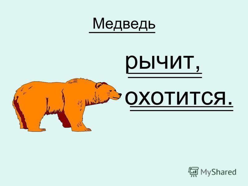 Медведь рычит, охотится.