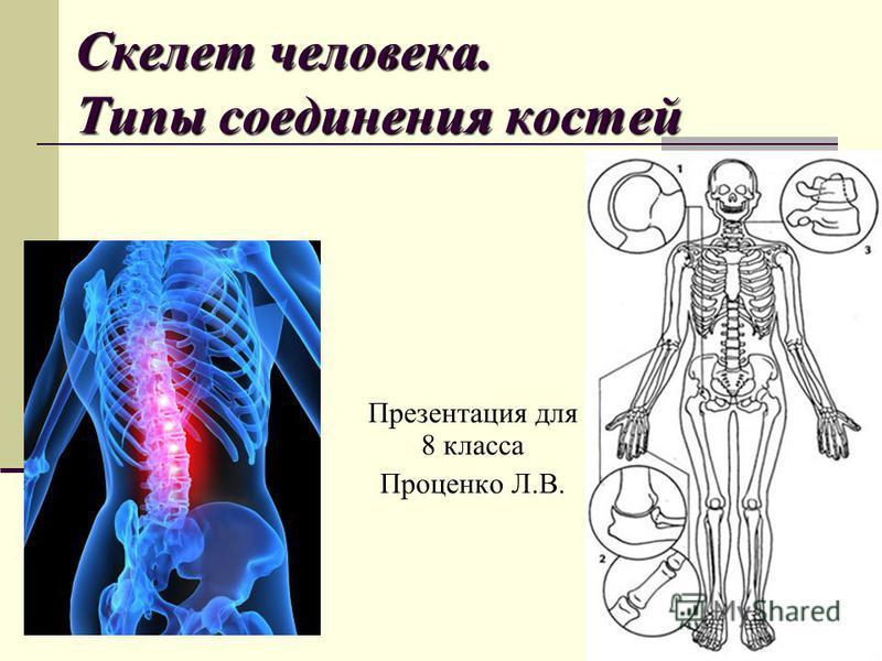 Скелет человека. Типы соединения костей Презентация для 8 класса Проценко Л.В.
