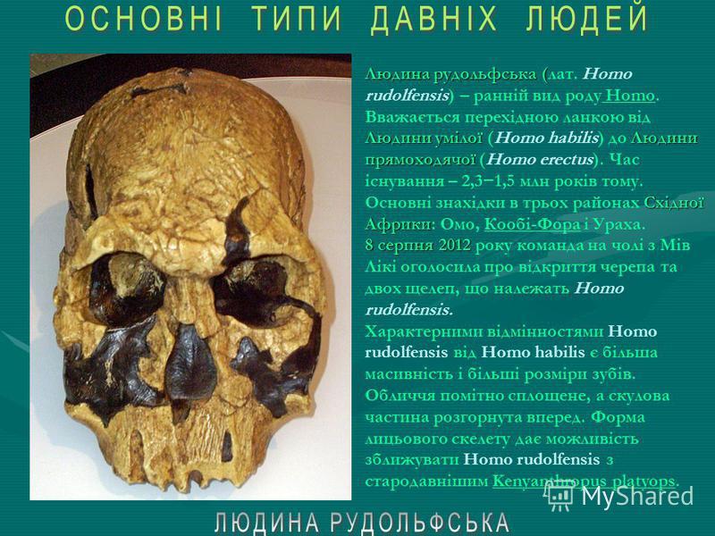 Людина вміла австралопітек Людина вміла (лат. Homo habilis) – високорозвинений австралопітек або перший представник роду Homo, що з'явився в Східній Африці близько 2,4 млн. років тому. Мері ДжонатаномЛікі 1960 року ОлдувайТанзанії. Знайдений археолог