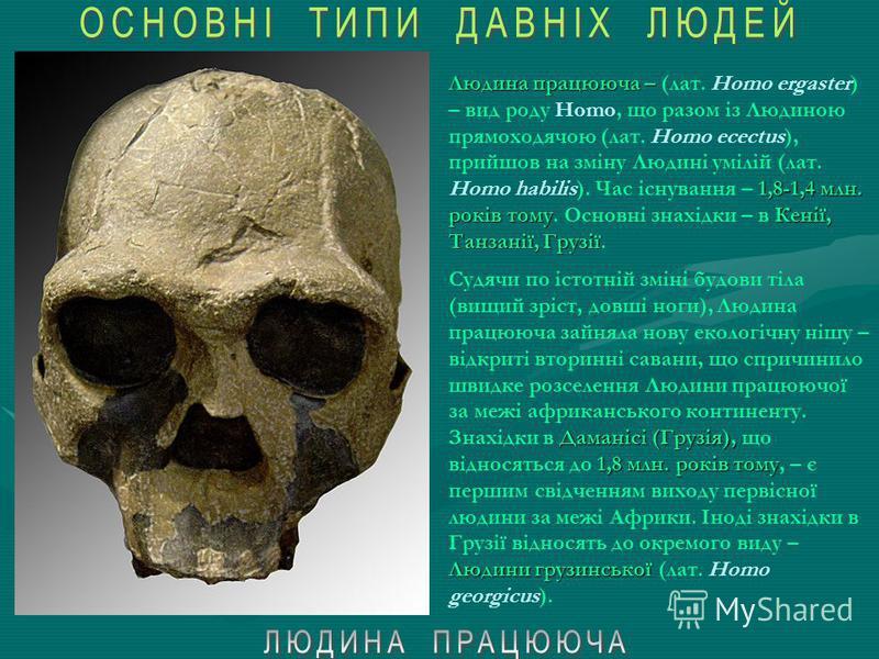 Людина рудольфська ( Людини умілоїЛюдини прямоходячої Східної Африки Людина рудольфська (лат. Homo rudolfensis) – ранній вид роду Homo. Вважається перехідною ланкою від Людини умілої (Homo habilis) до Людини прямоходячої (Homo erectus). Час існування