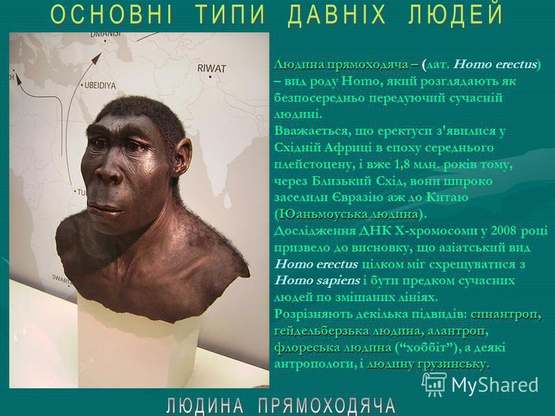 Людина працююча – 1,8-1,4 млн. років томуКенії, Танзанії, Грузії Людина працююча – (лат. Homo ergaster) – вид роду Homo, що разом із Людиною прямоходячою (лат. Homo ecectus), прийшов на зміну Людині умілій (лат. Homo habilis). Час існування – 1,8-1,4