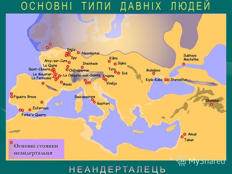 Неандерталець – (лат. Homo neanderthalensis) – 230,000-24,000 роках до н. е. Неандерталець – (лат. Homo neanderthalensis) – викопна форма людини верхнього плейстоцену, що населяли Європу й західну Азію у 230,000-24,000 роках до н. е. Неандерталі (Нім