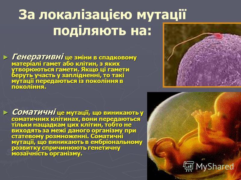 За впливом на життєдіяльність розрізняють мутації: корисні (підвищують життєздатність організмів і разом з природним добором є еволюційними факторами); корисні (підвищують життєздатність організмів і разом з природним добором є еволюційними факторами