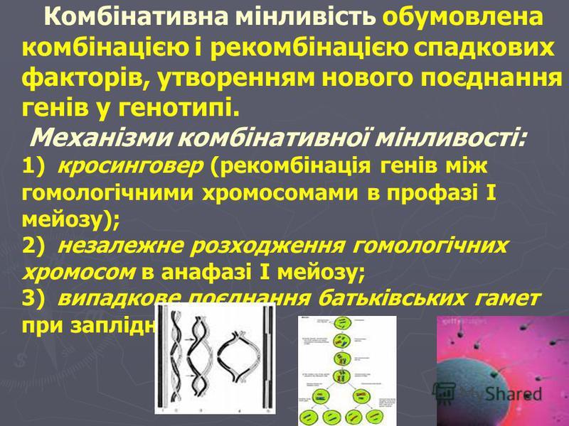 норма реакціі 2) вузька норма реакції (pH, концентрація K+, Na+, Ca2+ в крові); 2) вузька норма реакції (pH, концентрація K+, Na+, Ca2+ в крові); 3) однозначна норма реакції (групи крові за системою АВО, колір райдужки ока, волосся). 3) однозначна но