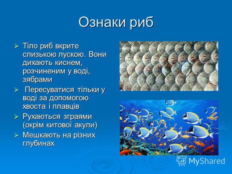 Ознаки риб Тіло риб вкрите слизькою лускою. Вони дихають киснем, розчиненим у воді, зябрами Тіло риб вкрите слизькою лускою. Вони дихають киснем, розчиненим у воді, зябрами Пересуватися тільки у воді за допомогою хвоста і плавців Пересуватися тільки
